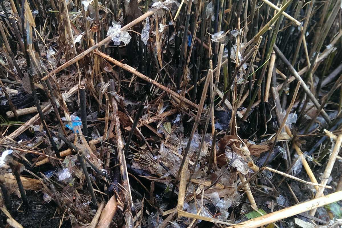Plastik in der Schlei
