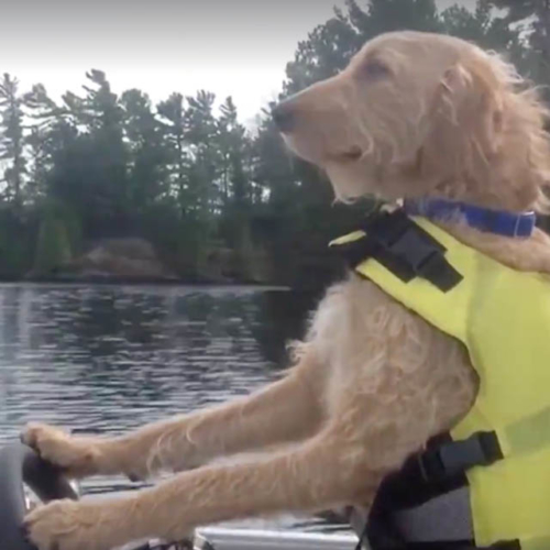 Fahrender Hund © Youtube Screenshot