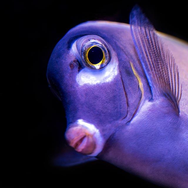 was fische wissen wie sie lieben spielen planen unsere verwandten unter wasser