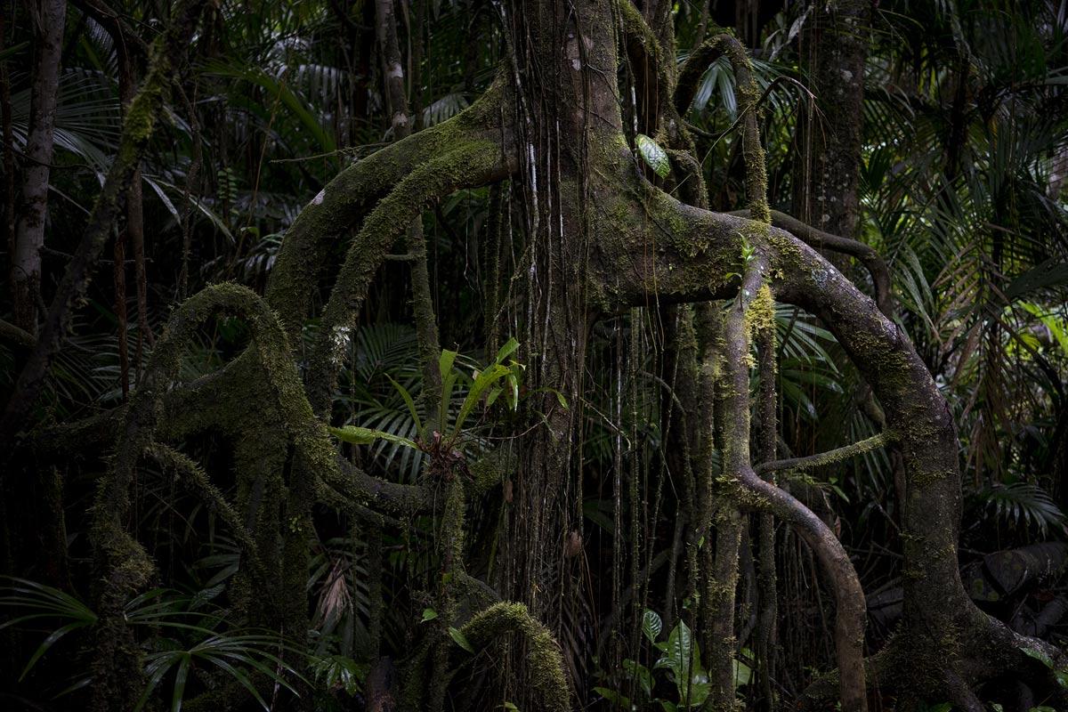 Amazonas im Kanu