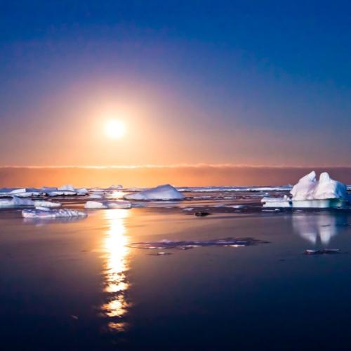 Vor Jahrmillionen wuchsen hier tropische Urwaldriesen: Wissenschaftler haben entdeckt, dass in der Antarktis während der Kreidezeit gemäßigtes Klima herrschte