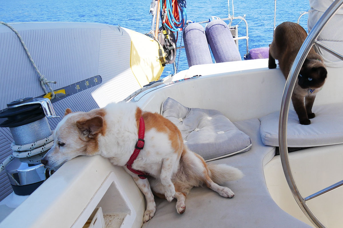 Hunde und Katzen an Bord