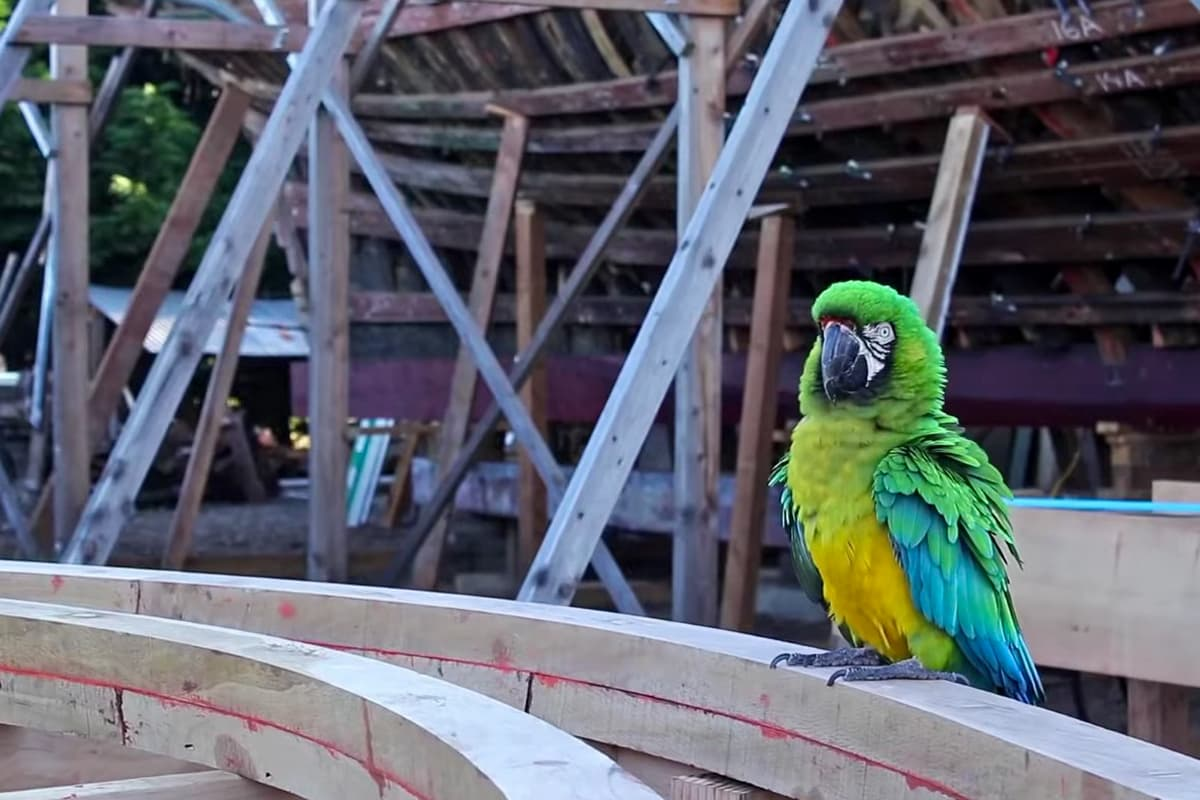 Pancho die Papageindame